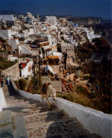 Donkey at Fira